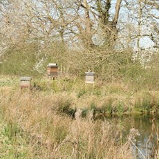 Our Haw Wood Bees next to the Hemp Ponds