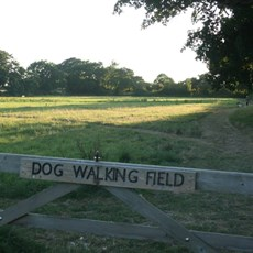 Dog Walking Field