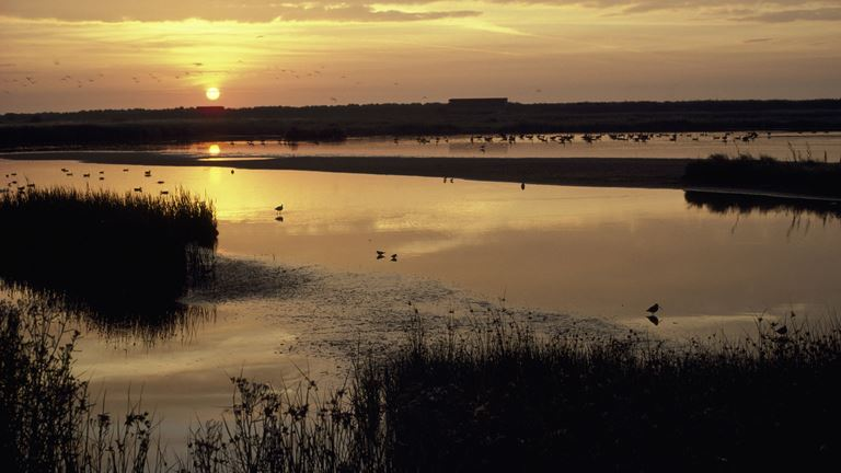 Thanks to RSPB Minsmere  for sunrise image.